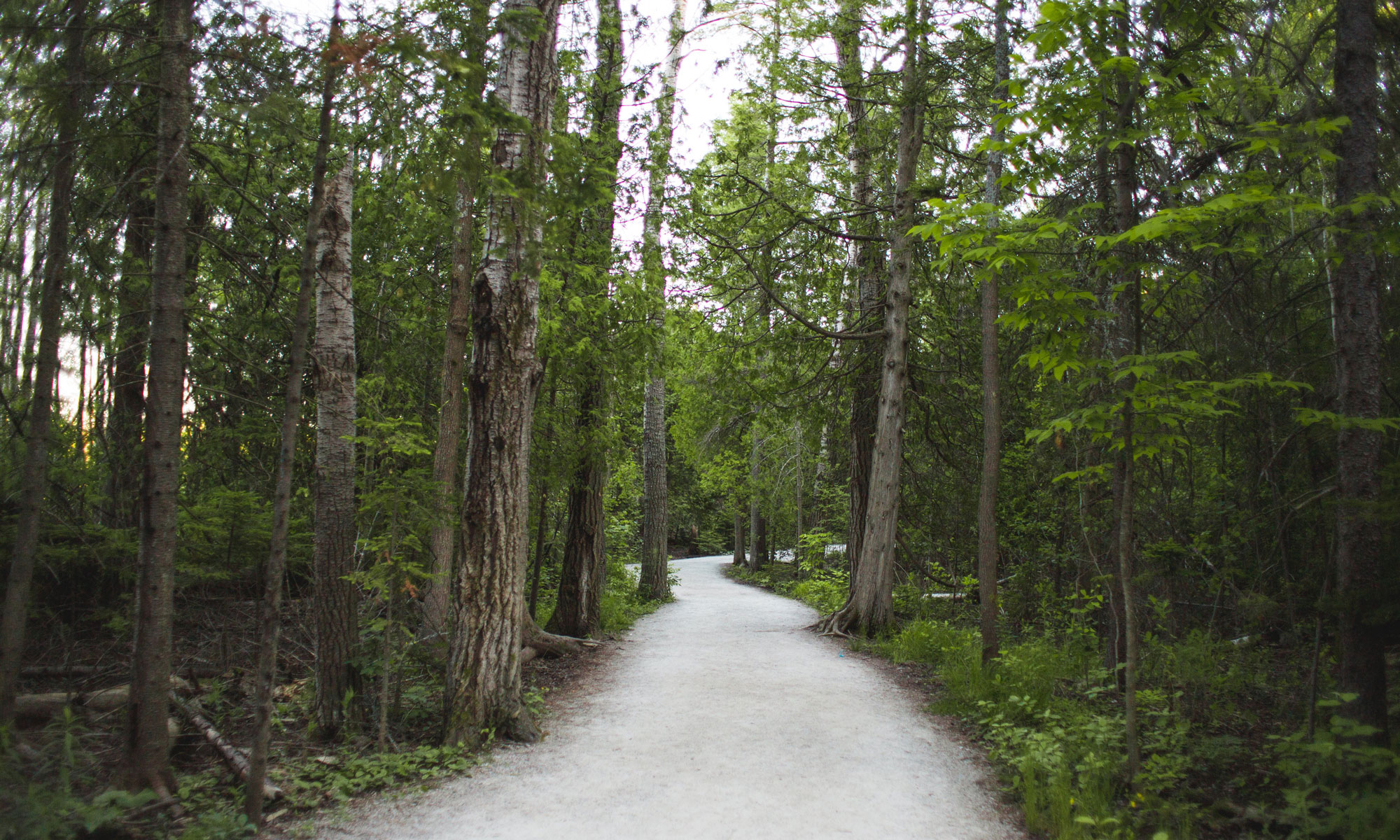 La Roseraie projet domiciliaire nature à Drummondville bien enraciné